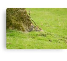 Rabbit kittens Canvas Print