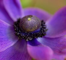 The Beauty of Macro by vbk70