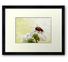 Always Look on the Bright Side of Life Framed Print