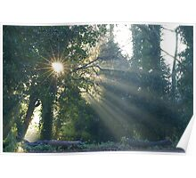 SunStar in the Wood Poster