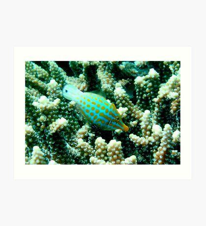 Longnose Filefish Art Print