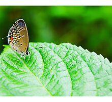 Butterfly on a Leaf by SCDigitalPhoto