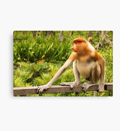 The Endangered Species - Proboscis Monkey Canvas Print
