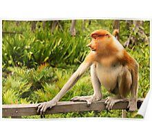 The Endangered Species - Proboscis Monkey Poster
