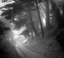 Misty Path at Stow Lake by Richard Mason