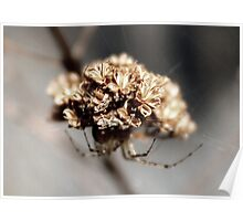 Oh Spider, Where Art Thou? IV by Rambling Rose Poster