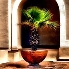 Planted Palm by Jimmy Ostgard