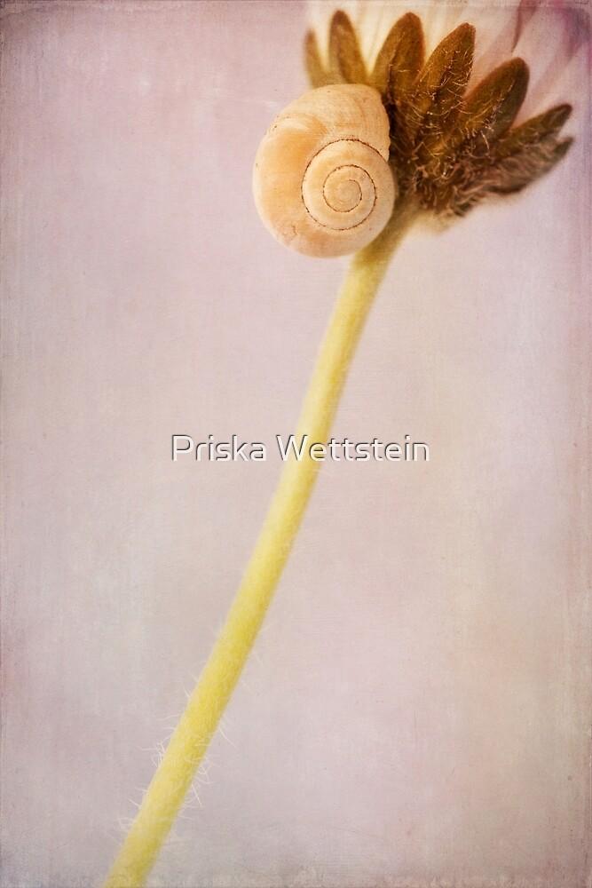 Cachette by Priska Wettstein