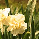 Painted Jonquils by Susan Blevins