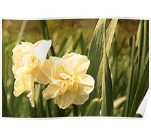 Painted Jonquils Poster