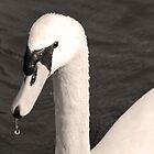 Elegant Swan by sjlphotography