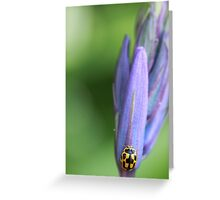 Harlequin on Bluebell Greeting Card