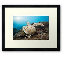 Green turtle underwater Framed Print