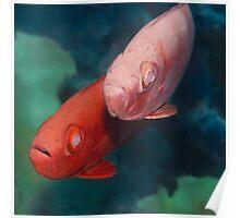 Cardinalfishes Poster