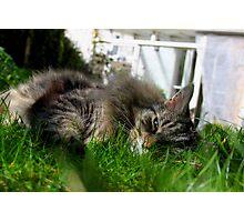 In the Sunshine Feline Good Photographic Print