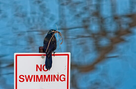 No Swimming by Jay Ryser