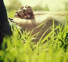 Smoke in the grass ii by Nicola Smith