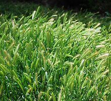 Grass and the Summer Breeze - Photographer: Taylor by Taylor Arrazola Photography