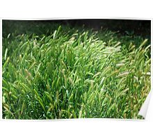 Grass and the Summer Breeze - Photographer: Taylor Poster