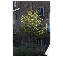 A lone tree brings light to brooding buildings Poster