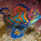 One of the most beautyful coloured fish  by Gorden