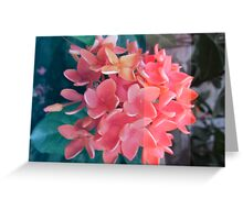 Spike Flowers Greeting Card
