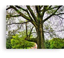 Mighty Oak Canvas Print