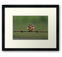 Baby Barn Swallow Framed Print