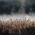 Cat Tails by Mary Ann Reilly