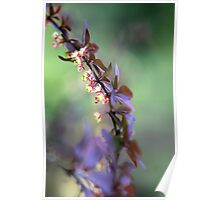 Spring Impressions Poster