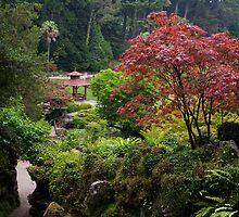 Japanese Garden by cpcphoto
