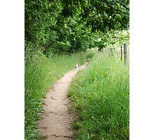 Kitten on the Path Photographic Print