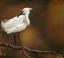 Snowy Egret  by Bonnie T.  Barry