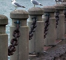 Gulls On Posts by BonnieToll