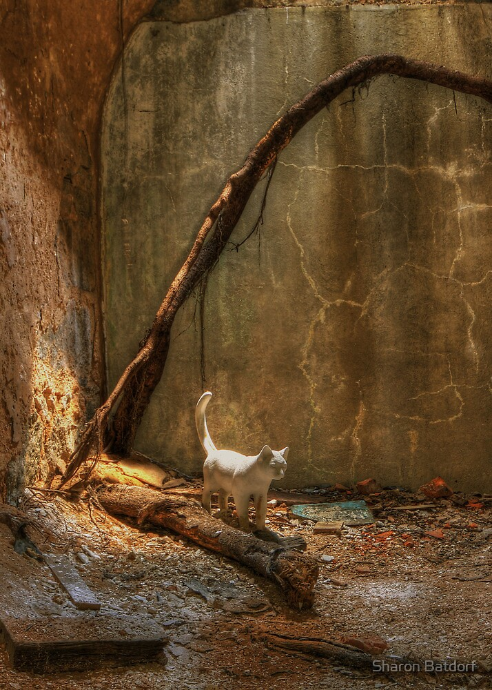 Ghost Cats by Sharon Batdorf