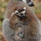 Ring-tailed Lemur Mother & Child  by Lindie Allen