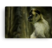 Monkey Thoughts Canvas Print