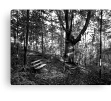 Little Bench... Big Tree Canvas Print