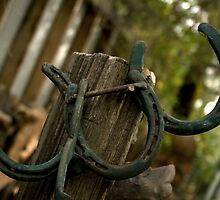 Horse Shoes by tlawyer132