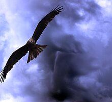 Raptor Sky II by savaggio