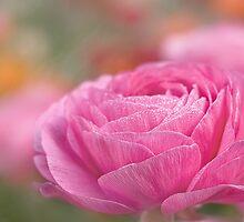 Morning in the ranunculus garden by Celeste Mookherjee