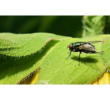 Fly on Green Photographic Print