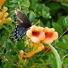 Butterfly and Trumpet Flowers by Gordon Taylor