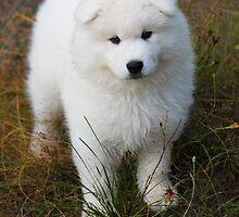 Puppy Love by Selene Samuelsson