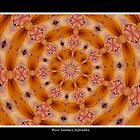 Lilies Kaleidoscope #1 by Rose Santuci-Sofranko