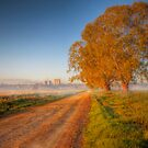 Country Road, Misty Morning - Murray Bridge, South Australia by Mark Richards