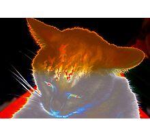 Spooky white cat Photographic Print