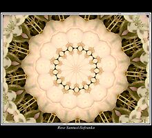 White Hydrangea Kaleidoscope #1 by Rose Santuci-Sofranko