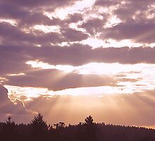 Beautiful Rays by Trish Moore