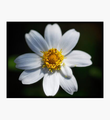 Flowers are Sunshine Photographic Print